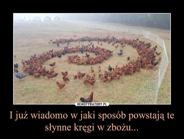 I już wiadomo w jaki sposób powstają te słynne kręgi w zbożu... –