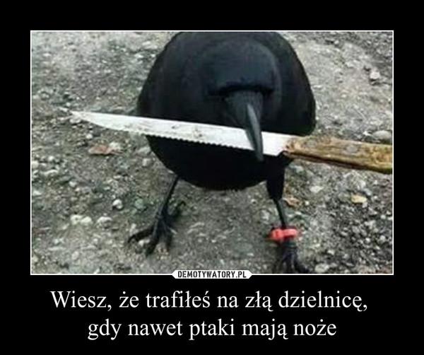 Wiesz, że trafiłeś na złą dzielnicę, gdy nawet ptaki mają noże –