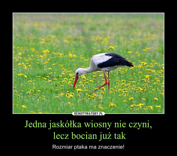 Jedna jaskółka wiosny nie czyni, lecz bocian już tak – Rozmiar ptaka ma znaczenie!