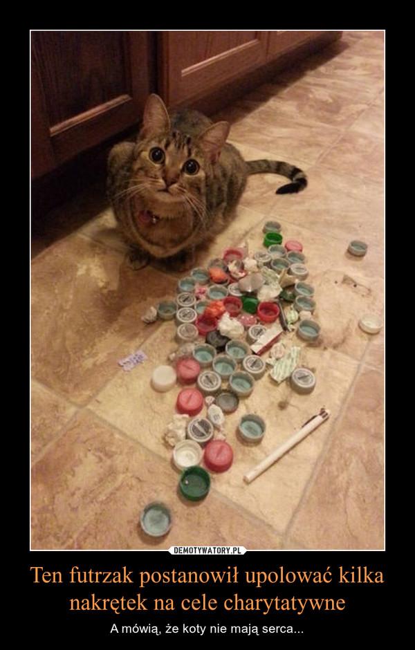 Ten futrzak postanowił upolować kilka nakrętek na cele charytatywne – A mówią, że koty nie mają serca...