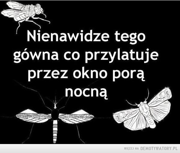 Owady, wszędzie owady... –  Nienawidze tego gówna co przylatuje przez okno porą nocną