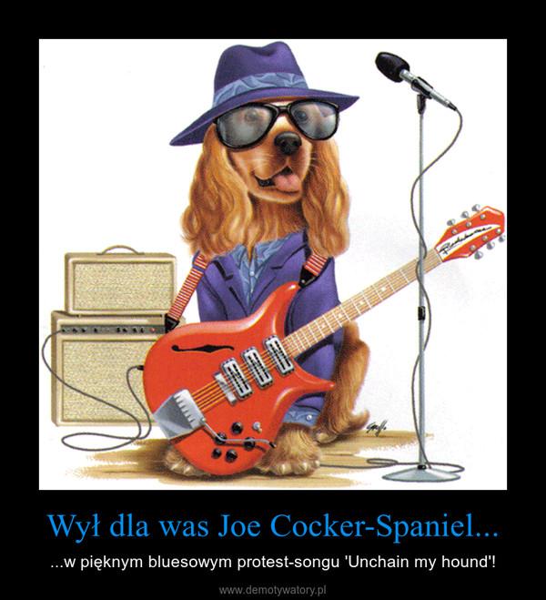 Wył dla was Joe Cocker-Spaniel... – ...w pięknym bluesowym protest-songu 'Unchain my hound'!