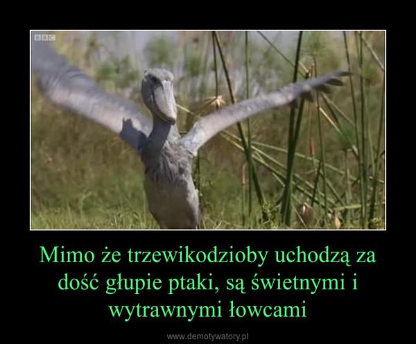 Mimo że trzewikodzioby uchodzą za dość głupie ptaki, są świetnymi i wytrawnymi łowcami –