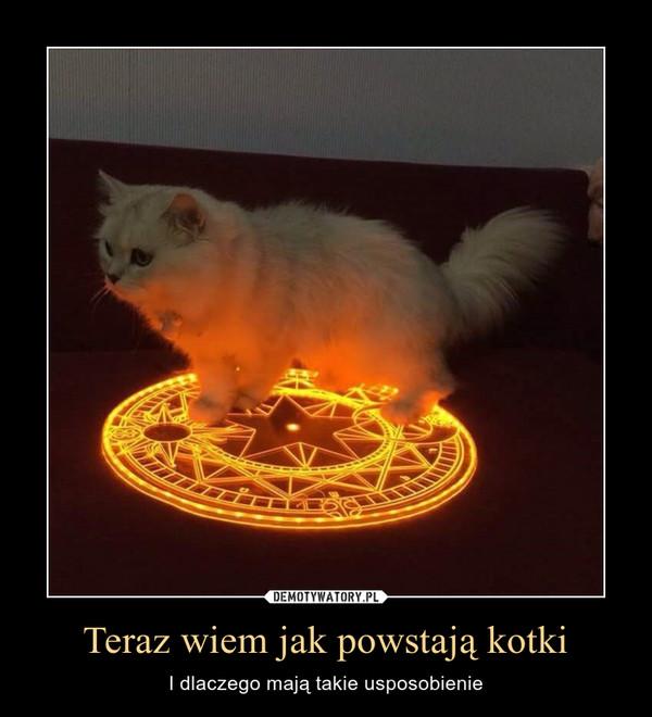 Teraz wiem jak powstają kotki – I dlaczego mają takie usposobienie
