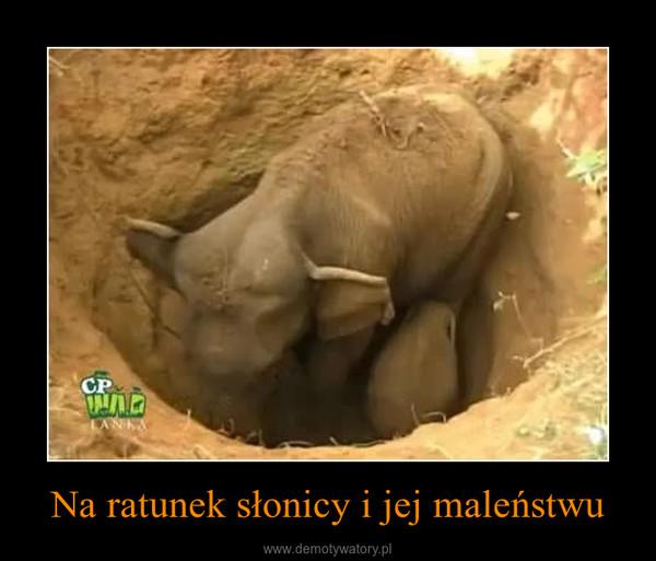 Na ratunek słonicy i jej maleństwu –