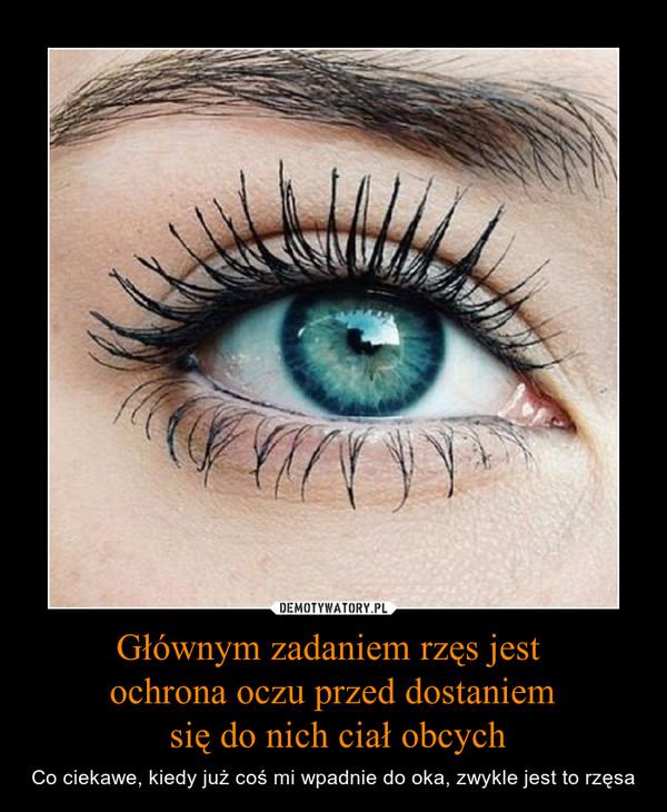 Głównym zadaniem rzęs jest ochrona oczu przed dostaniem się do nich ciał obcych – Co ciekawe, kiedy już coś mi wpadnie do oka, zwykle jest to rzęsa