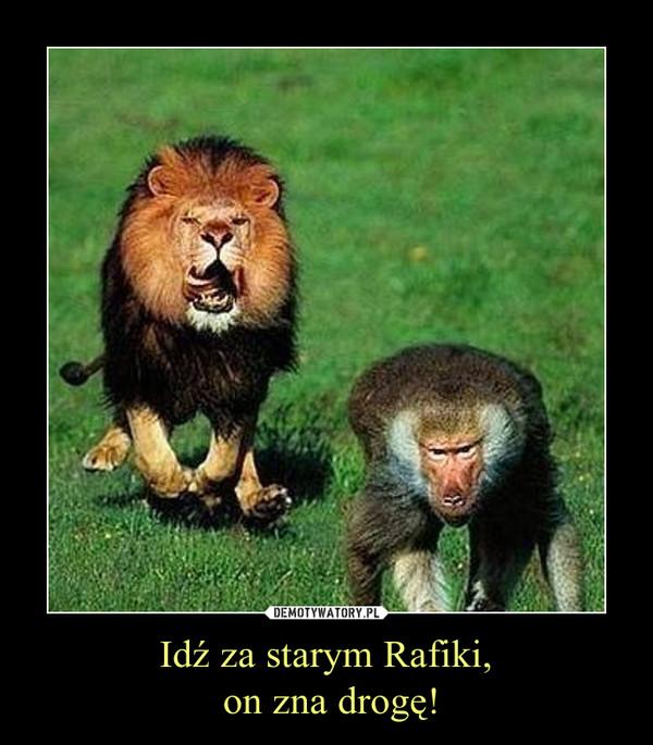 Idź za starym Rafiki, on zna drogę! –
