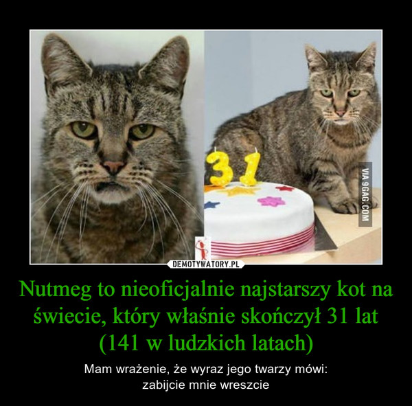 Nutmeg to nieoficjalnie najstarszy kot na świecie, który właśnie skończył 31 lat (141 w ludzkich latach) – Mam wrażenie, że wyraz jego twarzy mówi:zabijcie mnie wreszcie