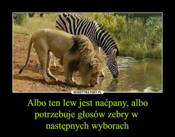 Albo ten lew jest naćpany, albo potrzebuje głosów zebry w następnych wyborach –