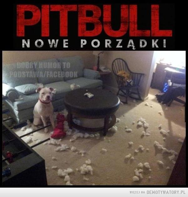 Pitbull Nowe porządki –