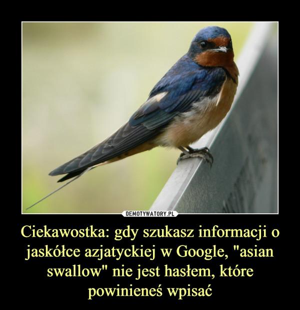 """Ciekawostka: gdy szukasz informacji o jaskółce azjatyckiej w Google, """"asian swallow"""" nie jest hasłem, które powinieneś wpisać –"""