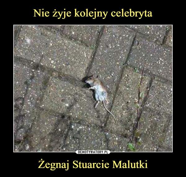 Żegnaj Stuarcie Malutki –