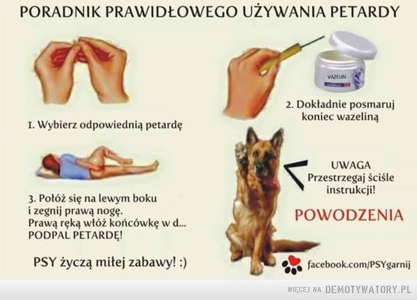 Pies radzi: –  PORADNIK PRAWIDŁOWEGO UŻYWANIA PETARDY