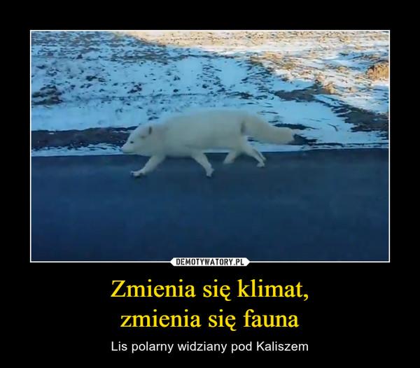 Zmienia się klimat,zmienia się fauna – Lis polarny widziany pod Kaliszem