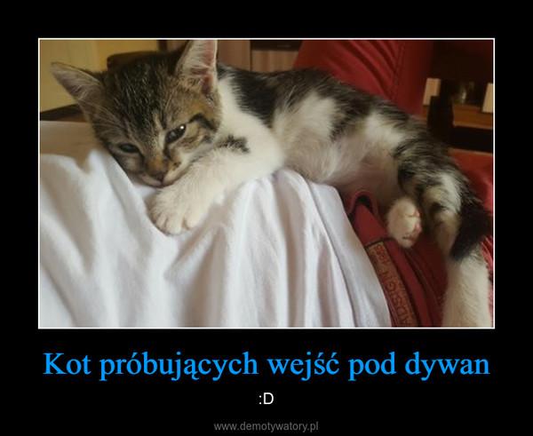 Kot próbujących wejść pod dywan – :D