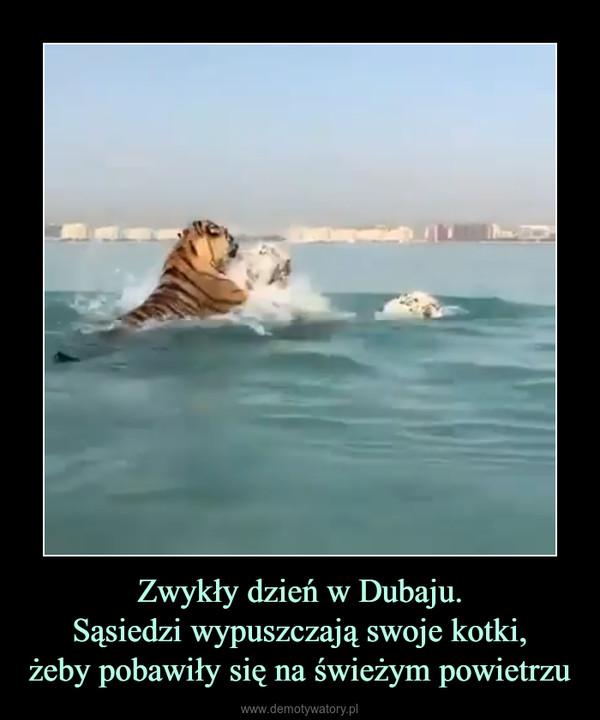 Zwykły dzień w Dubaju.Sąsiedzi wypuszczają swoje kotki,żeby pobawiły się na świeżym powietrzu –