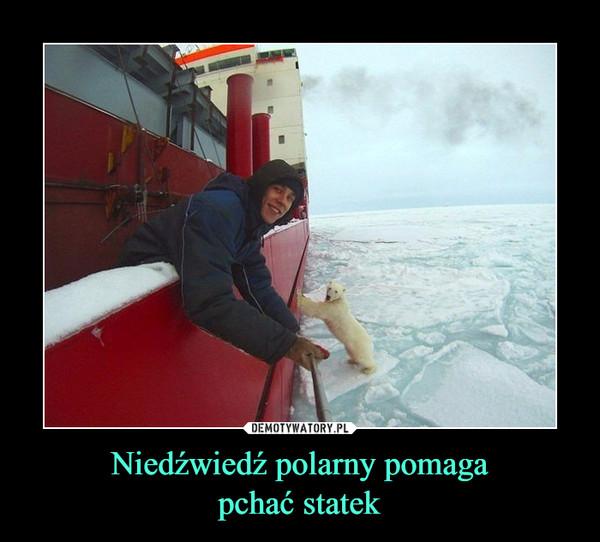Niedźwiedź polarny pomagapchać statek –