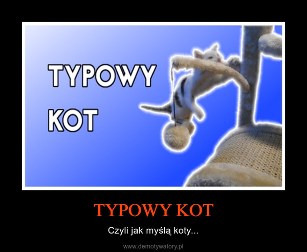 TYPOWY KOT – Czyli jak myślą koty...