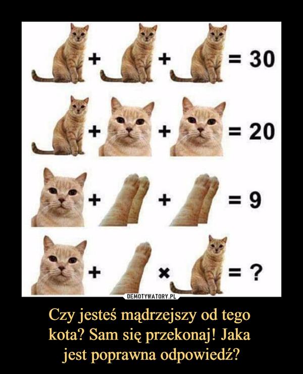 Czy jesteś mądrzejszy od tego kota? Sam się przekonaj! Jaka jest poprawna odpowiedź? –