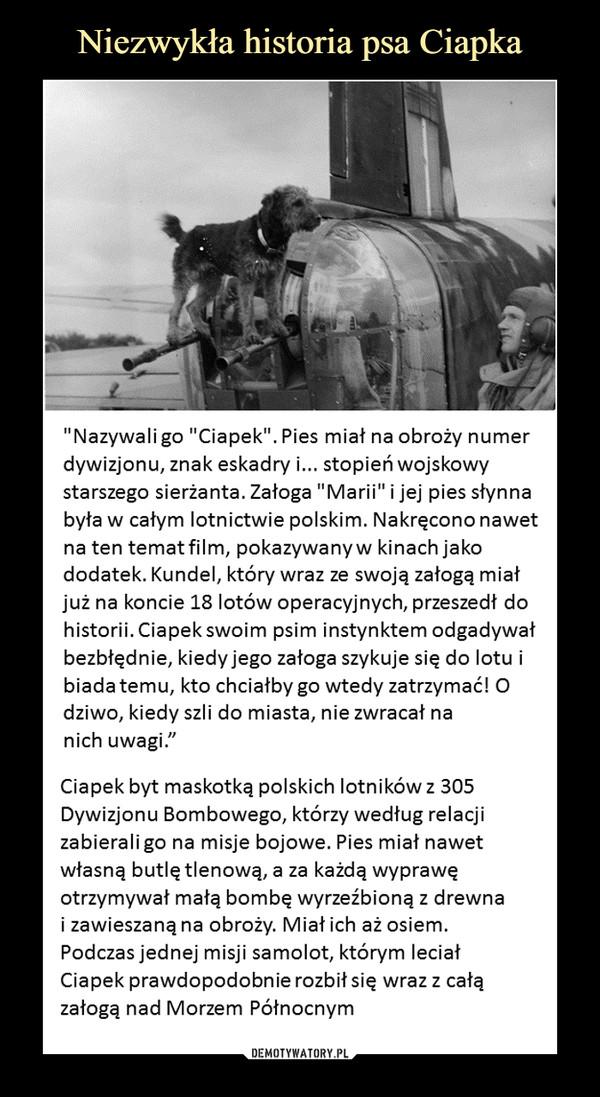 """–  """"Nazywali go """"Ciapek"""". Pies miał na obroży numer dywizjonu, znak eskadry i... stopień wojskowy starszego sierżanta. Załoga """"Marii"""" i jej pies słynnabyła w całym lotnictwie polskim. Nakręcono nawetna ten temat film, pokazywany w kinach jakododatek. Kundel, który wraz ze swoją załogą miałjuż na koncie 18 lotów operacyjnych, przeszedł dohistorii. Ciapek swoim psim instynktem odgadywałbezbłędnie, kiedy jego załoga szykuje się do lotu ibiada temu, kto chciałby go wtedy zatrzymać! Odziwo, kiedy szli do miasta, nie zwracał nanich uwagi.""""Ciapek byt maskotką polskich lotników z 305Dywizjonu Bombowego, którzy według relacjizabierali go na misje bojowe. Pies miał nawetwłasną butlę tlenową, a za każdą wyprawęotrzymywał małą bombę wyrzeźbioną z drewnai zawieszaną na obroży. Miał ich aż osiem.Podczas jednej misji samolot, którym leciałCiapek prawdopodobnie rozbił się wraz z całązałogą nad Morzem Północnym"""