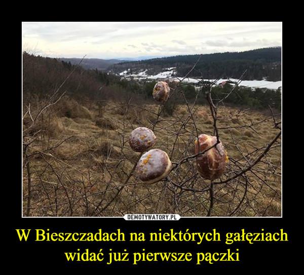 W Bieszczadach na niektórych gałęziach widać już pierwsze pączki –