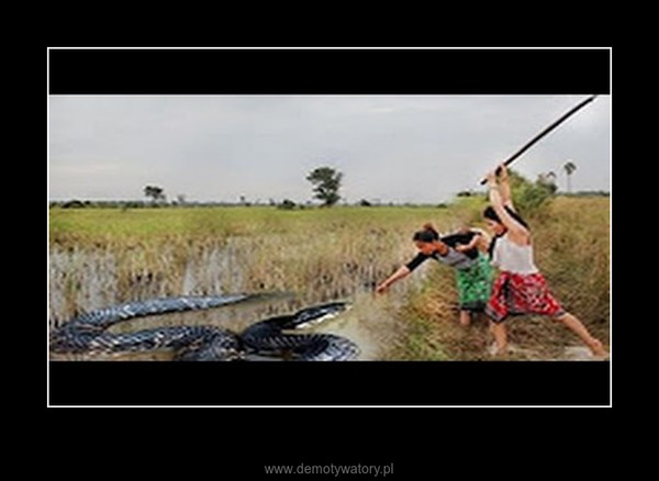 Two Incredible Girl Catch Vicious Cobra Snake Using Bamboo Trap How To Catch Water Snake – Two Incredible Girl Catch Vicious Cobra Snake Using Bamboo Trap How To Catch Water Snake