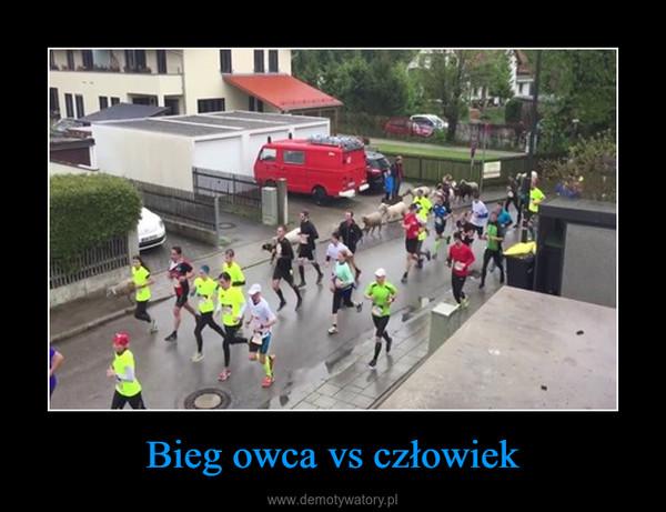 Bieg owca vs człowiek –