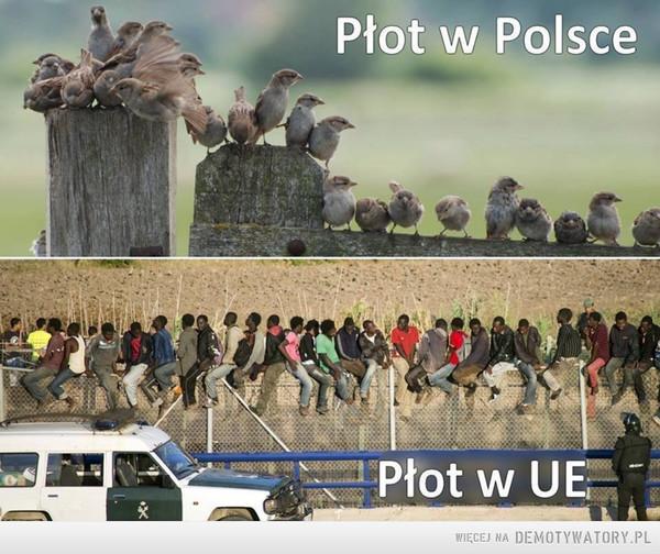 Różnice kulturowe –  Płot w PolscePłot w UE