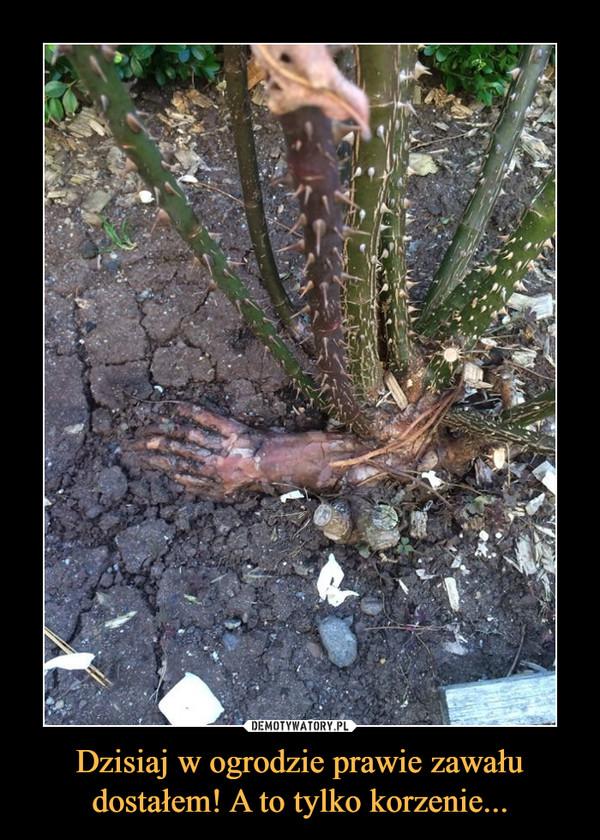 Dzisiaj w ogrodzie prawie zawału dostałem! A to tylko korzenie... –
