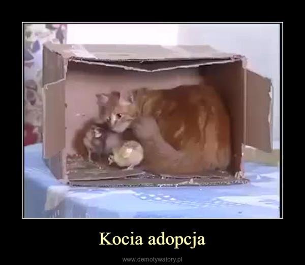 Kocia adopcja –