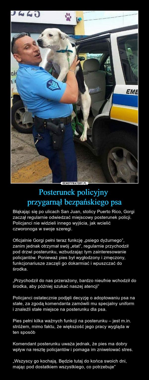 """Posterunek policyjny przygarnął bezpańskiego psa – Błąkając się po ulicach San Juan, stolicy Puerto Rico, Gorgi zaczął regularnie odwiedzać miejscowy posterunek policji. Policjanci nie widzieli innego wyjścia, jak wcielić czworonoga w swoje szeregi.Oficjalnie Gorgi pełni teraz funkcję """"psiego dyżurnego"""", zanim jednak otrzymał swój """"etat"""", regularnie przychodził pod drzwi posterunku, wzbudzając tym zainteresowanie policjantów. Ponieważ pies był wygłodzony i zmęczony, funkcjonariusze zaczęli go dokarmiać i wpuszczać do środka.""""Przychodził do nas przerażony, bardzo nieufnie wchodził do środka, aby później szukać naszej atencji""""Policjanci ostatecznie podjęli decyzję o adoptowaniu psa na stałe, za zgodą komendanta zamówili mu specjalny uniform i znaleźli stałe miejsce na posterunku dla psa.Pies pełni kilka ważnych funkcji na posterunku – jest m.in. stróżem, mimo faktu, że większość jego pracy wygląda w ten sposóbKomendant posterunku uważa jednak, że pies ma dobry wpływ na resztę policjantów i pomaga im zniwelować stres.""""Wszyscy go kochają. Będzie tutaj do końca swoich dni, mając pod dostatkiem wszystkiego, co potrzebuje"""""""