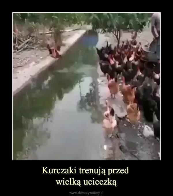 Kurczaki trenują przed wielką ucieczką –