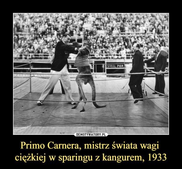 Primo Carnera, mistrz świata wagi ciężkiej w sparingu z kangurem, 1933 –