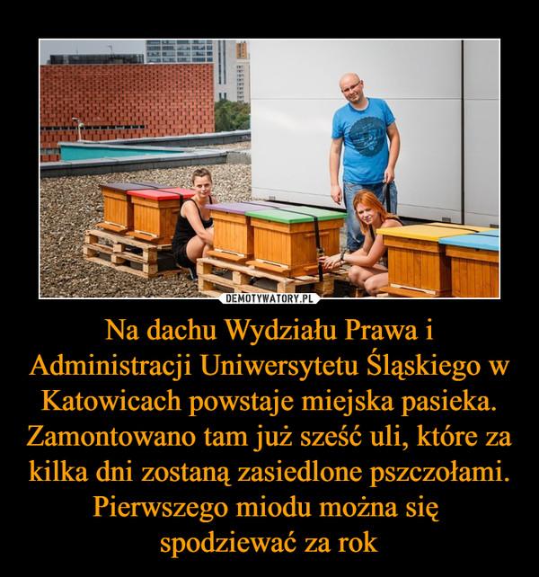 Na dachu Wydziału Prawa i Administracji Uniwersytetu Śląskiego w Katowicach powstaje miejska pasieka. Zamontowano tam już sześć uli, które za kilka dni zostaną zasiedlone pszczołami. Pierwszego miodu można się spodziewać za rok –