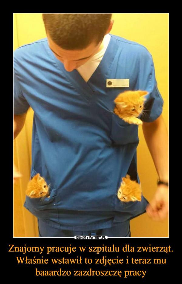 Znajomy pracuje w szpitalu dla zwierząt. Właśnie wstawił to zdjęcie i teraz mu baaardzo zazdroszczę pracy –