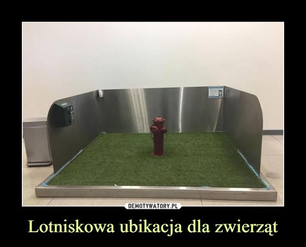 Lotniskowa ubikacja dla zwierząt –