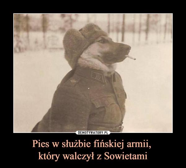 Pies w służbie fińskiej armii, który walczył z Sowietami –