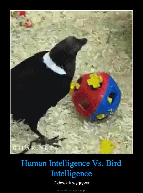 Human Intelligence Vs. Bird Intelligence – Człowiek wygrywa