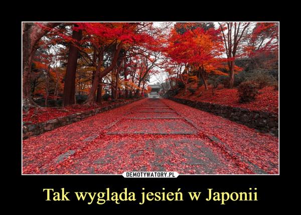 Tak wygląda jesień w Japonii –