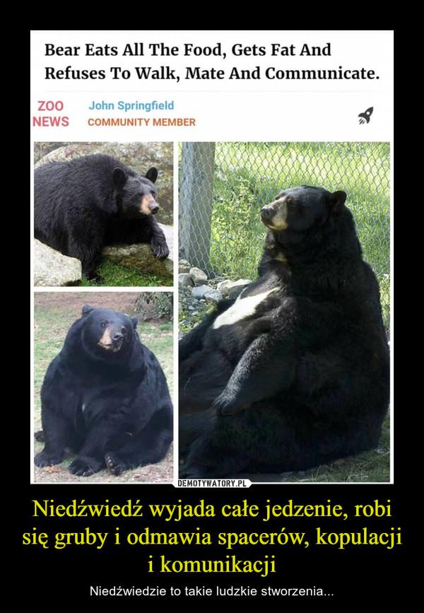 Niedźwiedź wyjada całe jedzenie, robi się gruby i odmawia spacerów, kopulacji i komunikacji – Niedźwiedzie to takie ludzkie stworzenia... Bear eats all the food, gets fat and refuses to walk, mate and communicate zoo news John Springield Community member