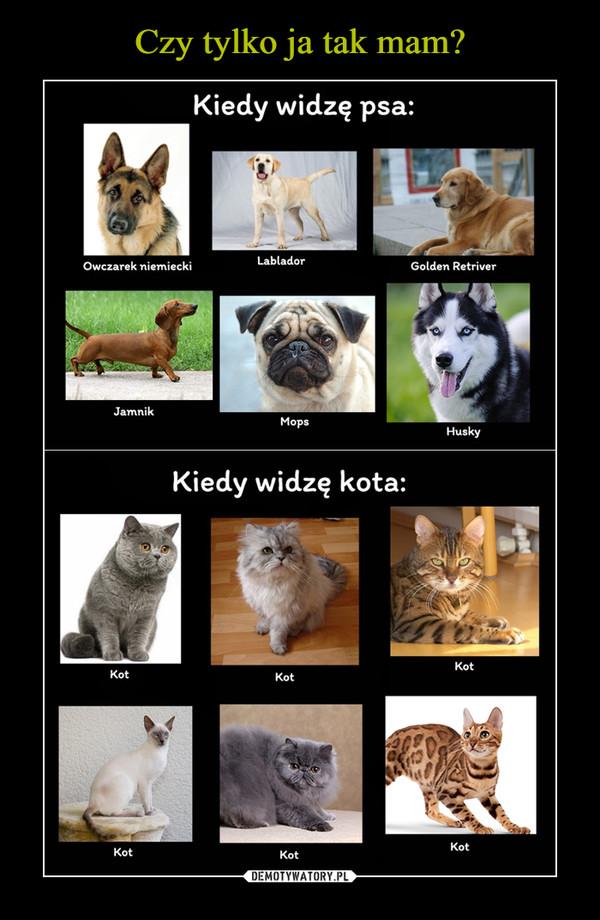 –  Kiedy widzę psa Owczarek niemiecki Labrador Golden Rettiver Jamnik mops Husky Kiedy widzę kota kot