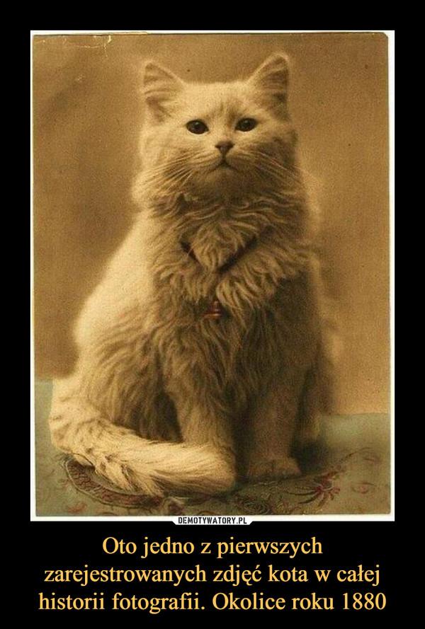Oto jedno z pierwszych zarejestrowanych zdjęć kota w całej historii fotografii. Okolice roku 1880 –