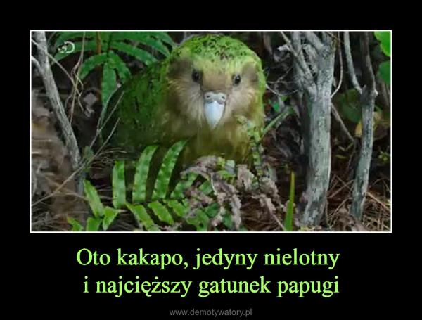 Oto kakapo, jedyny nielotny i najcięższy gatunek papugi –