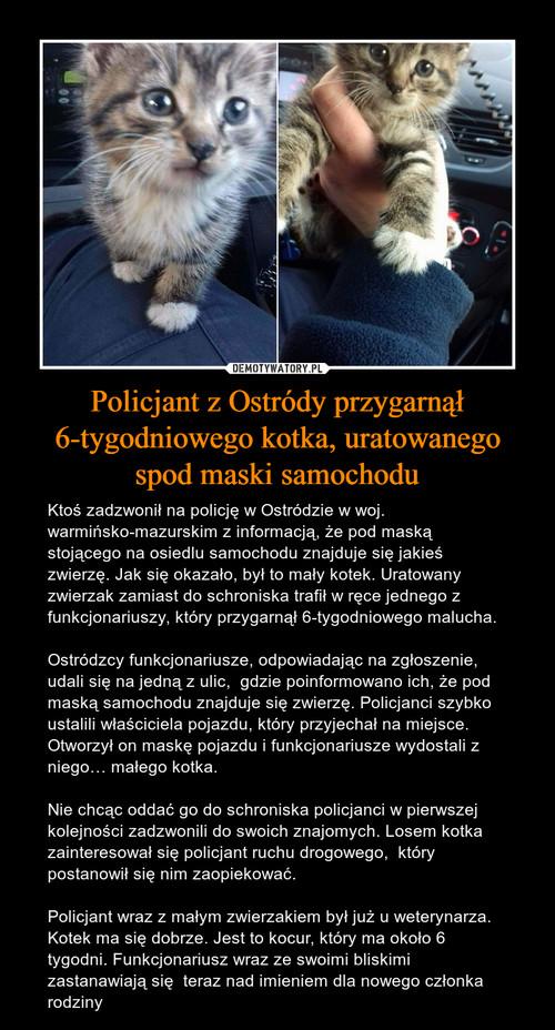 Policjant z Ostródy przygarnął 6-tygodniowego kotka, uratowanego spod maski samochodu