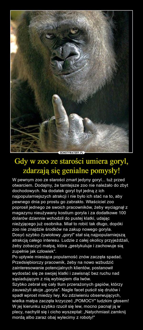 """Gdy w zoo ze starości umiera goryl, zdarzają się genialne pomysły! – W pewnym zoo ze starości zmarł jedyny goryl... tuż przed otwarciem. Dodajmy, że tamtejsze zoo nie należało do zbyt dochodowych. Na dodatek goryl był jedną z ich najpopularniejszych atrakcji i nie było ich stać na to, aby pewnego dnia po prostu go zabrakło. Właściciel zoo poprosił jednego ze swoich pracowników, żeby wyciągnął z magazynu nieużywany kostium goryla i za dodatkowe 100 dolarów dziennie wchodził do pustej klatki, udając nieżyjącego już osobnika. Miał to robić tak długo, dopóki zoo nie znajdzie środków na zakup nowego goryla. Dosyć szybko żywiołowy """"goryl"""" stał sią najpopularniejszą atrakcją całego interesu. Ludzie z całej okolicy przyjeżdżali, żeby zobaczyć małpą, która """"gestykuluje i zachowuje sią zupełnie jak człowiek"""". Po upływie miesiąca popularność znów zaczęła spadać. Przedsiębiorczy pracownik, żeby na nowo wzbudzić zainteresowanie potencjalnych klientów, postanowił wydostać się ze swojej klatki i zawisnąć bez ruchu nad sąsiadującym z nią wybiegiem dla lwów. Szybko zebrał się cały tłum przerażonych gapiów, którzy zauważyli akcje """"goryla"""". Nagle facet puścił się drutów i spadł wprost miedzy lwy. Ku zdziwieniu obserwujących, wielka małpa zaczęła krzyczeć """"POMOCY"""" ludzkim głosem! W jej kierunku szybko rzucił się lew, mocno pacnął ją w plecy, nachylił się i cicho wyszeptał: """"Natychmiast zamknij mordą albo zaraz obaj wylecimy z roboty!"""""""
