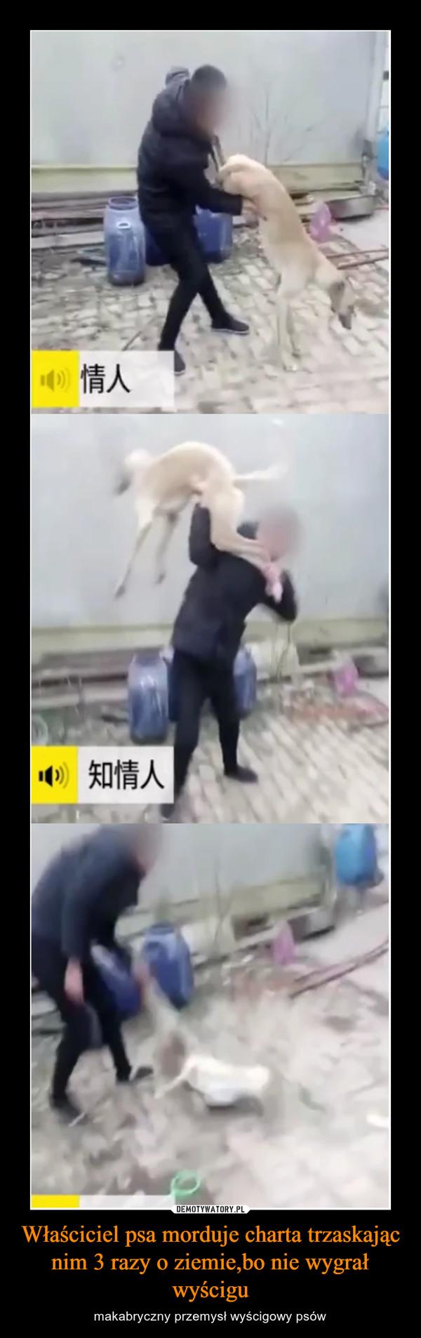 Właściciel psa morduje charta trzaskając nim 3 razy o ziemie,bo nie wygrał wyścigu – makabryczny przemysł wyścigowy psów