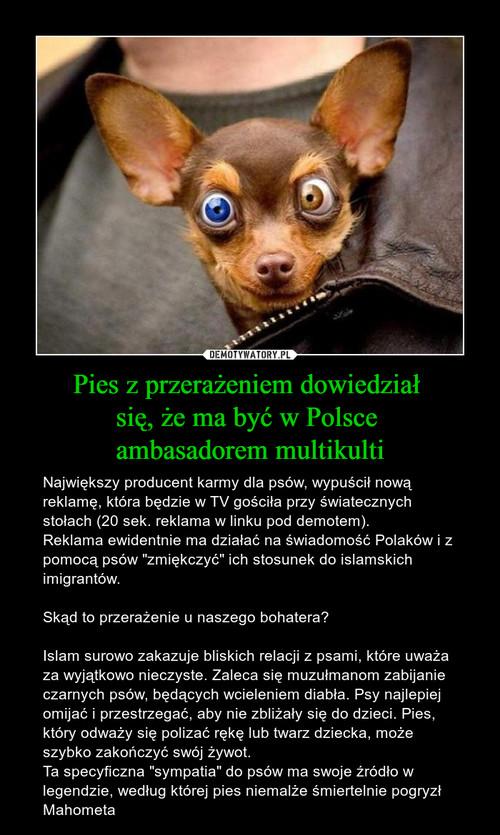 Pies z przerażeniem dowiedział  się, że ma być w Polsce  ambasadorem multikulti
