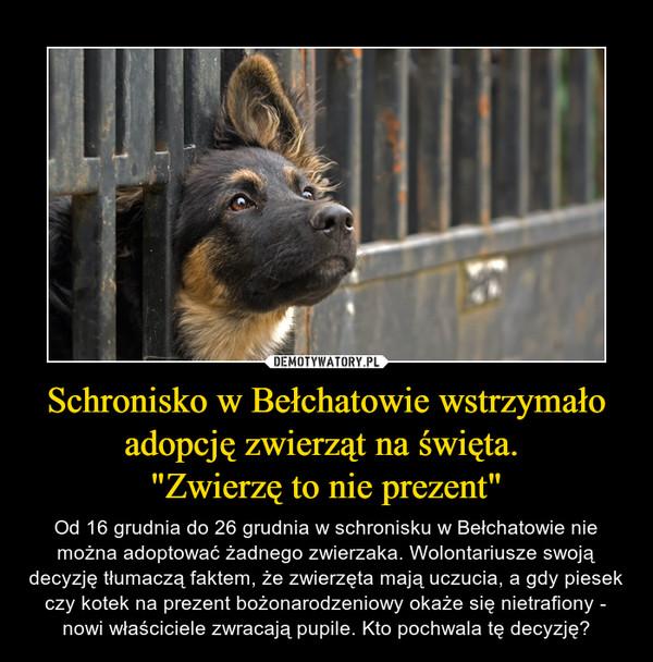 """Schronisko w Bełchatowie wstrzymało adopcję zwierząt na święta. """"Zwierzę to nie prezent"""" – Od 16 grudnia do 26 grudnia w schronisku w Bełchatowie nie można adoptować żadnego zwierzaka. Wolontariusze swoją decyzję tłumaczą faktem, że zwierzęta mają uczucia, a gdy piesek czy kotek na prezent bożonarodzeniowy okaże się nietrafiony - nowi właściciele zwracają pupile. Kto pochwala tę decyzję?"""