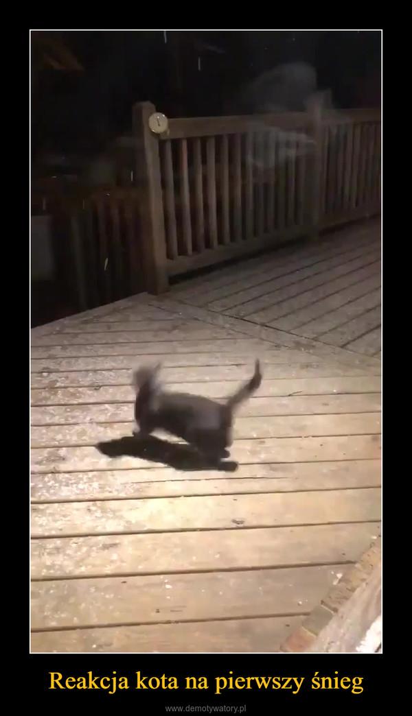 Reakcja kota na pierwszy śnieg –