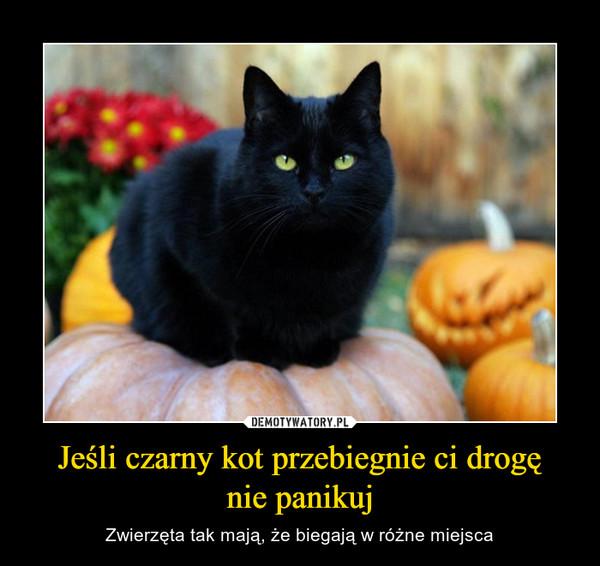 Jeśli czarny kot przebiegnie ci drogęnie panikuj – Zwierzęta tak mają, że biegają w różne miejsca